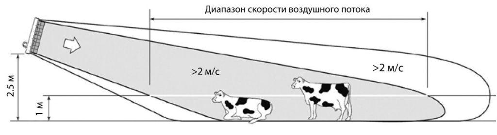 d (2).jpg